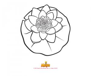 Kleurplaat 15: Waterlelie
